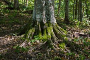 Семашхо гора в Туапсинском районе