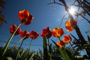 Туапсе весной